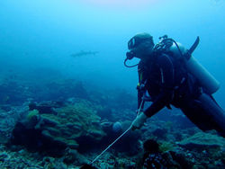 diver at Hin Muang liveaboard diving Thailand