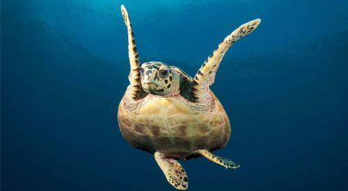 Intro Sea Turtle